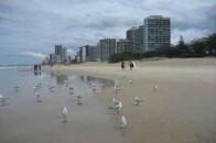 澳大利亚——完美黄金海岸