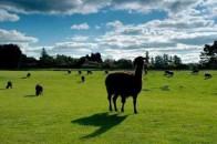 爱歌顿农庄