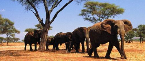 是南非第四大野生动物园