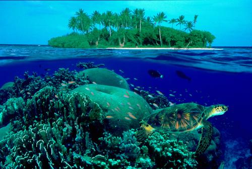 关键字: 岛屿巴厘岛海岛海龟