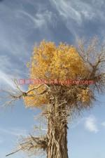 南疆环线考察之旅9