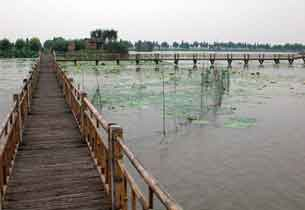 一年四季都可看风景的洪湖蓝田生态园
