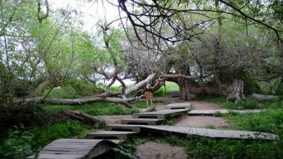 新疆阿克苏天山神木园,图二