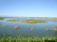 新疆博乐艾比湖湿地自然保护区