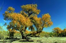 新疆博乐甘家湖白梭梭自然保护区