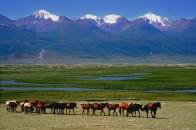 新疆哈密巴里坤大草原