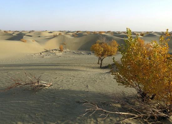 新疆库尔勒塔克拉玛干沙漠,图二