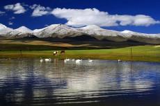 新疆库尔勒巴音布鲁克天鹅湖