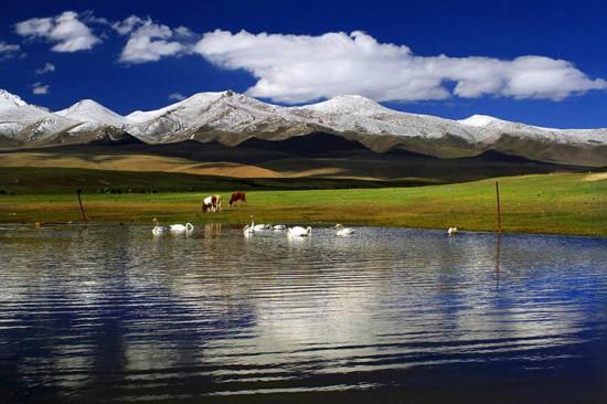 新疆库尔勒巴音布鲁克天鹅湖,图二