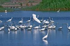 新疆库尔勒白鹭洲头景区