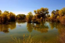 新疆库尔勒塔克拉玛干的胡杨林