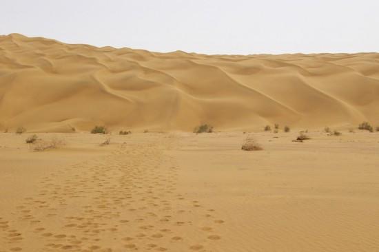 新疆库尔勒塔克拉玛干沙漠,图一