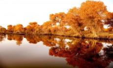 新疆喀什地区泽普县金湖杨国家森林公园