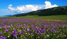 新疆塔城塔斯提风景区
