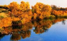 新疆塔城甘家湖梭梭林自然保护区