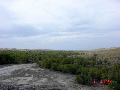 塔城旅游景点  甘家湖梭梭林自然保护区位于天山北部