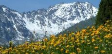 新疆乌鲁木齐菊花台