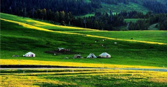 新疆伊犁那拉提草原,图一