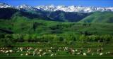 新疆伊犁那拉提草原