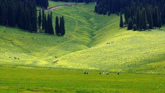 新疆伊犁那拉提草原,图三