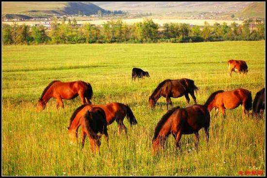 有太阳和绿草的地方   ——那拉提草原   走进那拉提草原,没有人不被她的美丽所迷惑。那拉提草原地处天山腹地,伊犁河谷东端,位于伊犁哈萨克自治州境内,旅游册上说,总面积有960平方公里,平均海拔1800米,年降水量880毫米。这里山峦起伏,绿草如茵,草原辽阔,溪水柔美,群山俊秀,松林如涛,一年四季一日相见,是旅游揽胜、探险猎奇、度假避暑的好去处。那拉提草原有着悠久的历史文化和独特的民俗风情,历史上的塞人、匈奴、乌孙、突厥和蒙古人都曾在这片上建立过游牧宫廷。自古这里就是东西方交往