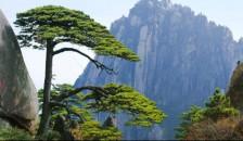 """上海.苏州.无锡.南京.黄山.千岛湖.杭州.千年水乡""""乌镇""""单飞单卧12日"""