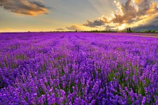 6月12日相约紫色梦幻薰衣草之旅两日游