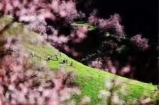 伊犁吐尔根杏花、赛里木湖、霍尔果斯口岸、石河子三日游