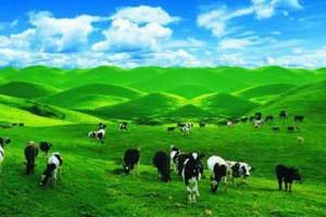 天山天池、吐鲁番、南山牧场 双飞5日游
