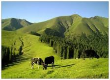 天池、喀纳斯、禾木、吐鲁番、南山牧场七日游(独立成团)