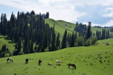 南北疆自然风光、民俗风情23日大环游