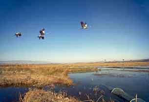 冬季草海观鸟迷醉高原的碧波万顷