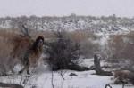 新疆有哪些自然保护区