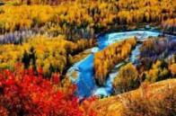 新疆阿勒泰白哈巴国家森林公园