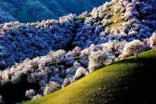 天池、喀纳斯湖、伊犁那拉提草原、吐鲁番 12日游(品质型)