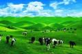 南山牧场品质纯玩一日游
